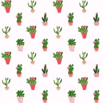 Succulent 15