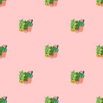 Succulent 18